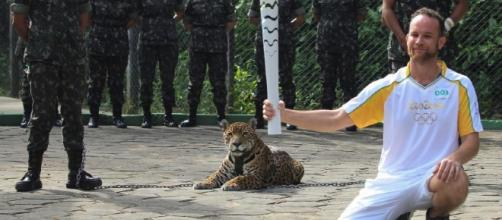 Escaped Jaguar Shot Dead After Olympic Torch Ceremony in Brazil