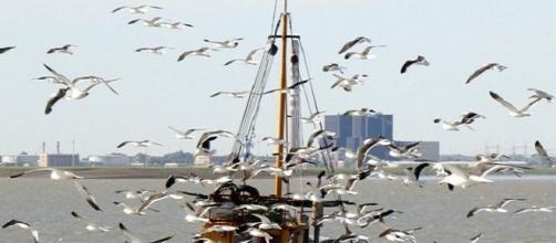 Pescadores piden salir de la Unión Europea