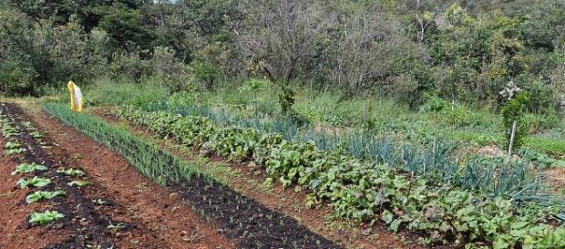 Sistemas agroflorestais funcionam melhor no clima quente. Foto: Antonio Cruz/ Agência Brasil
