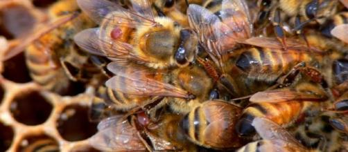 Lewis County Beekeepers' Association - Varroa & OTHER PARASITES ...