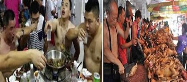 Começou o festival de carne de cachorro na China