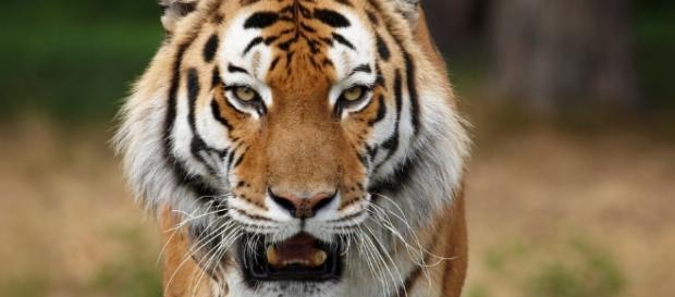 Definición de Animales Depredadores » Concepto en Definición ABC - definicionabc.com