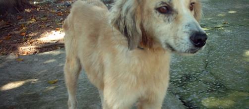 Animais de rua recebem a atenção e o cuidado de voluntários