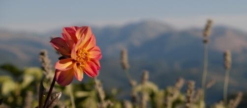 Fiore stagione estiva in montagna