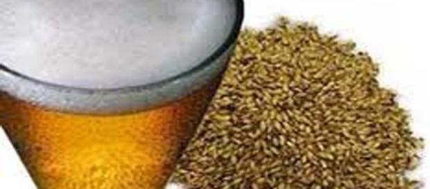 Levadura de Cerveza , contraindicaciones, funciones y Propiedades ... - facilisimo.com