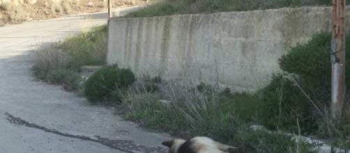 Sdegno e rabbia per l'uccisione di un cane - Buteraweb.it - buteraweb.it