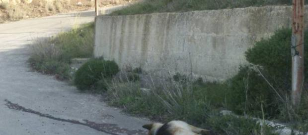 Sdegno e rabbia per l'uccisione di un cane - Buteraweb.it - buteraweb.it