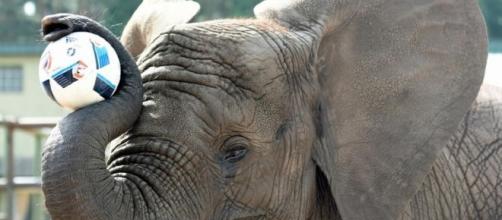 """l'elefantessa Nelly ha """"scelto"""" la sua Germania"""