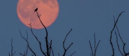 """StrawberryMoon: fotos de la """"luna de fresa"""" que coincidió con el ... - univision.com"""