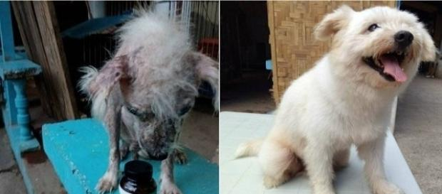 Fotos mostram incrível recuperação de cão de rua abandonado