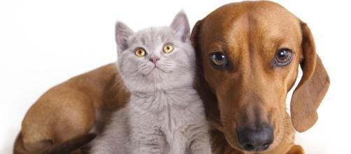 la filariosi nel cane e nel gatto