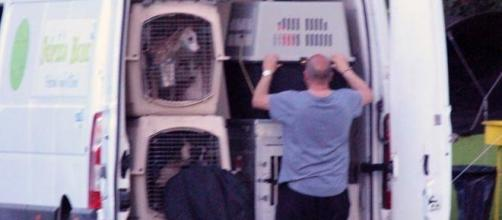 Strage di cani alla 21° esposizione cinofila di Rende, il furgone incriminato