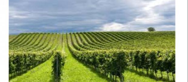 IMU agricola, le esenzioni ed i casi particolari per il 2016