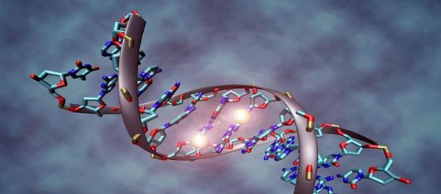 Polêmico trabalho levanta dúvidas sobre a criação de humanos em laboratório