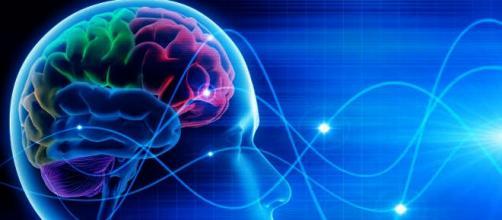 Perdita di memoria: gli alimenti che aiutano il cervello