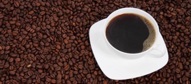 Empresa da Itália oferece bolsa para formação de Mestrado Internacional em Economia e Ciência do Café