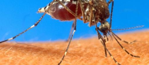 Descubre las razones por las que te pican los mosquitos más que a otras personas