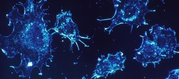 Células cancerígenas são destruídas mais facilmente com a imunoterapia