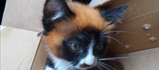 Foto do dia em que foi comprada em um pet shop na China