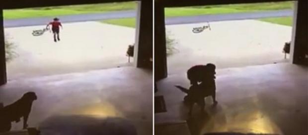 Vídeo mostra criança invadindo casa e roubando abraço de cachorro
