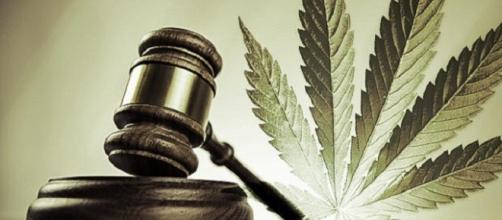E você, acha que a legalização da maconha acabaria com o tráfico de drogas, reduzindo assim a violência nos grandes centros ?