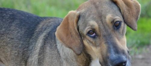 RBJ - ONG realiza programa de castração de cães de rua em Palmas - com.br