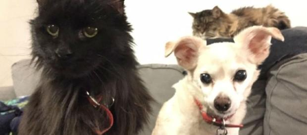 Aging Pets And The Queer Family - curvemag.com