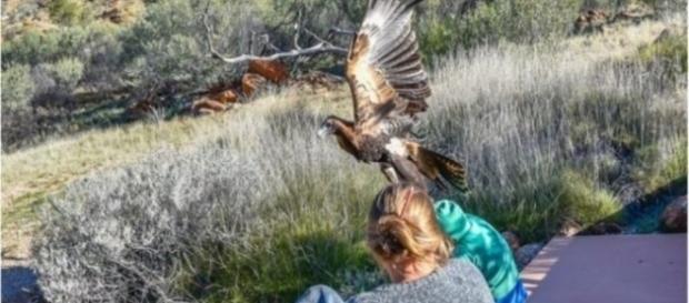 Fotos mostram águia tentando carregar uma criança
