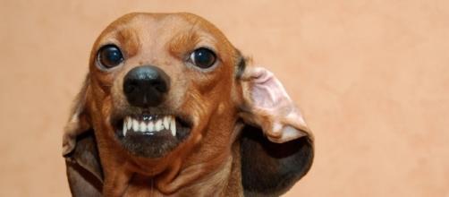 In arrivo l'esorcismo per cani