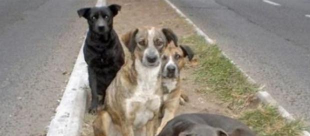 Cães de rua abandonados (Foto meramente ilustrativa)