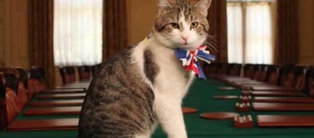 Larry, el gato más famoso de Gran Bretaña