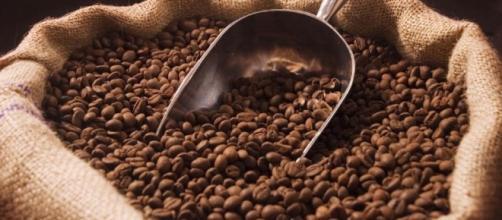 El Salvador disminuye más del 40% de exportaciones de café en ... - revistasumma.com