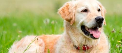How to find the perfect dog breed to suit your lifestyle | Pickle - com.au