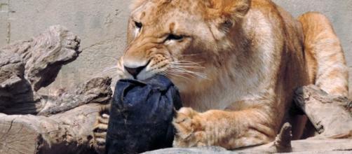Kamine Zoo animals distress denim for designer jeans to raise ... - net.au