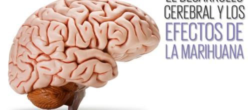 El cannabis afecta al 'cableado' de nuestro cerebro.