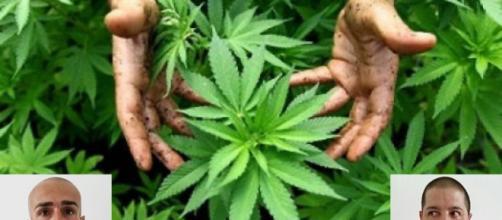 La Polizia ha sequestrato una piantagione casalinga di marijuana. Nella foto in basso a destra Stefano Tidili, a sinistra Gianluca Muntoni.
