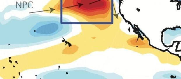 La burbuja cálida sigue afectando el ecosistema marino de la región