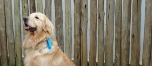 Cães terapeutas ajudam em perdas