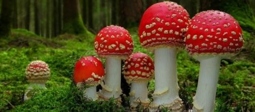 Weird Christmas - Santa Claus and the Magic Mushroom - America's ... - americas-most-haunted.com