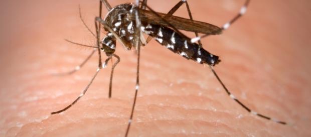 """Devido ao fenômeno """"imunidade de rebanho"""", o surto de Zika na América Latina pode acabar em três anos"""