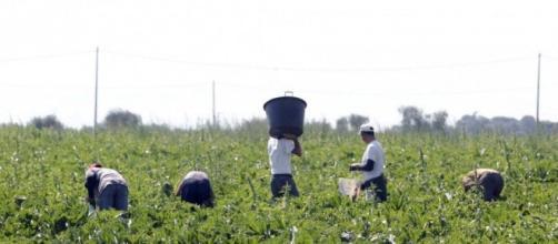 Lavoro dei braccianti agricoli nei campi