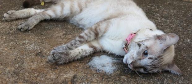 Detentos matam gatos e fazem churrasco