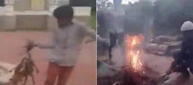 Jovens queimam filhotinhos de cachorro e chocam o mundo