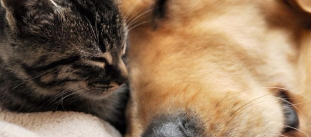 Nova lei fixa multa de até R$ 3 mil para quem maltratar animais