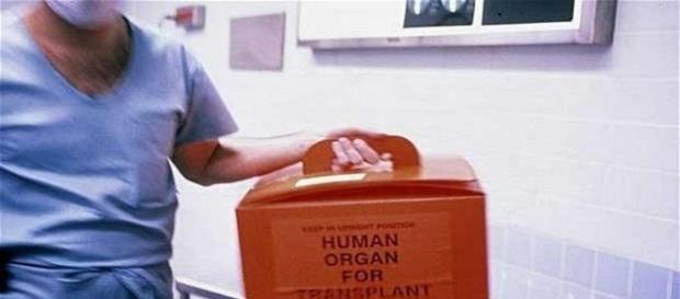 Órgãos rejeitados poderão ser reutilizados com o uso de células-tronco (Telegraph)