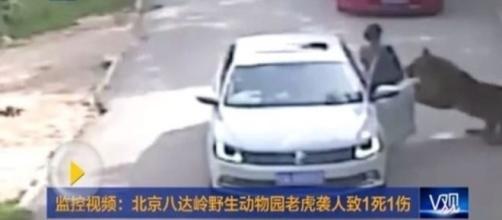 Mulher é atacada por tigre no parque de Pequim, na China