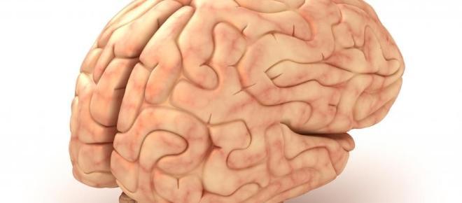 Dokarmianie mózgu – jak z pomocą diety uchronić mózg przed starzeniem