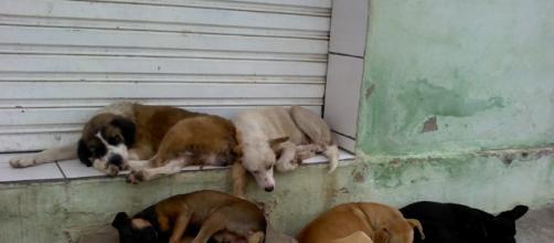 Vereador quer proibir que os animais abandonados sejam alimentados