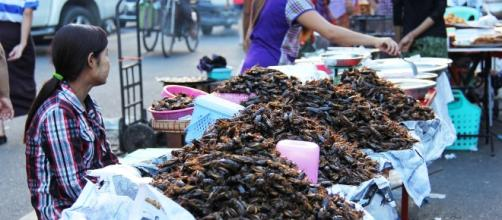 China sells deep fried cockroaches/ Photo: Pixabay.com
