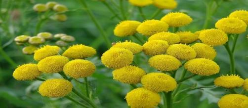 Plantas medicinales. Public Domain